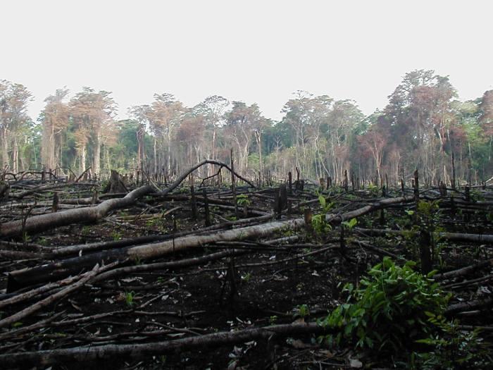 abholzung-regenwald-brandrodung-biosprit
