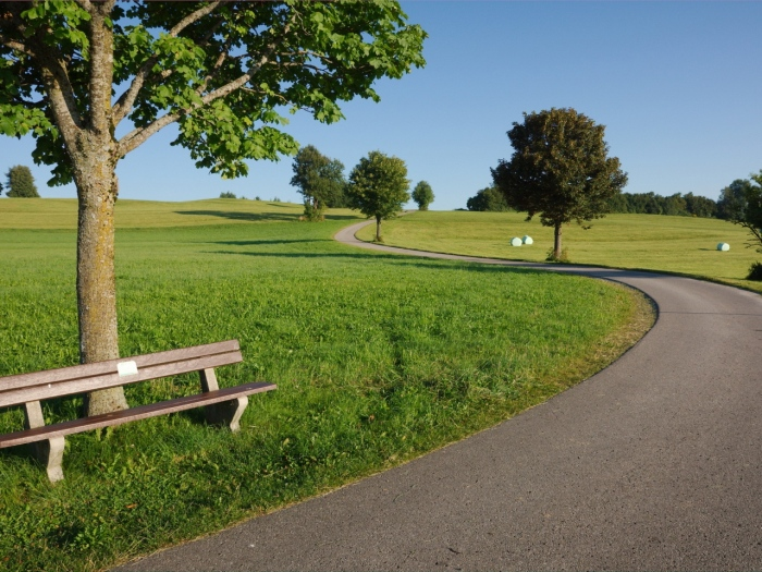 summer-road-trees-benches