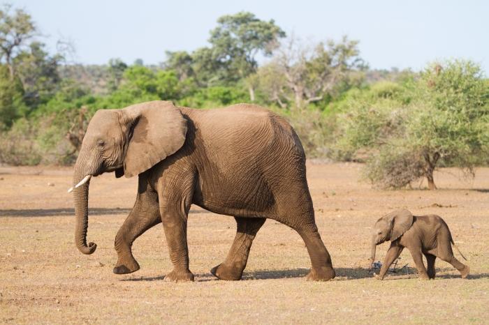 elefantbaby-29066-10110